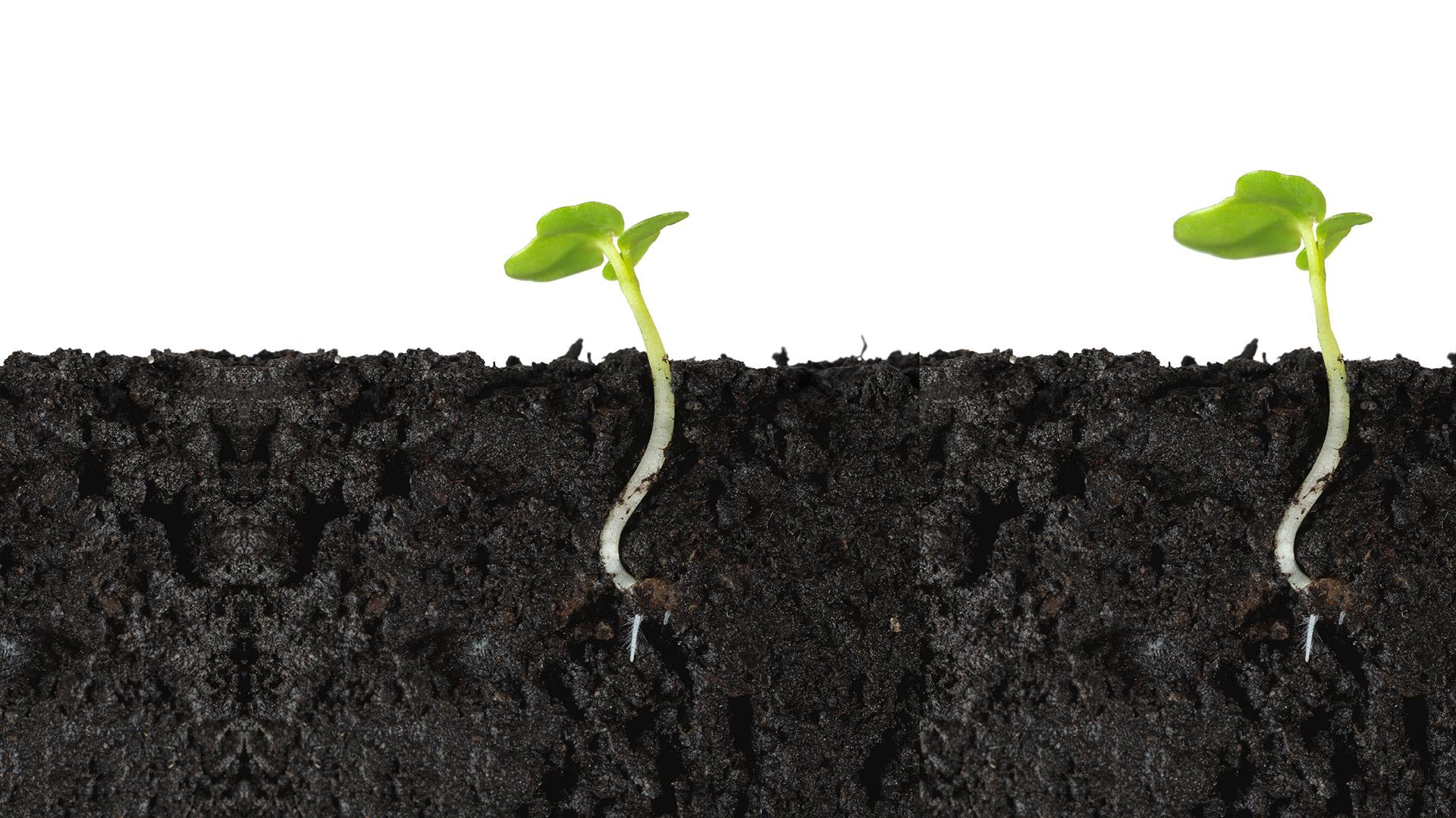 Lauksaimniecības zemes pārdošana un kapitāla pieauguma nodoklis